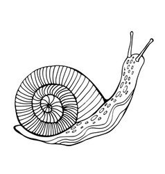 snail coloring page for children and adults vector image vector image