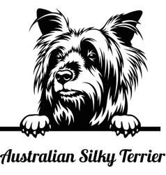 australian silky terrier - peeking dogs - breed vector image