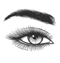beautiful lady eye sketch vector image vector image