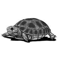 Monochromatic turtle iconcartoon vector