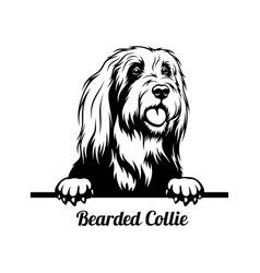 Peeking dog - bearded collie breed - head isolated vector