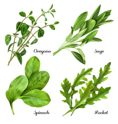 Realistic herbs and spices set vector