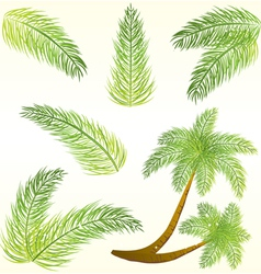Tropical palm tree leaves vector