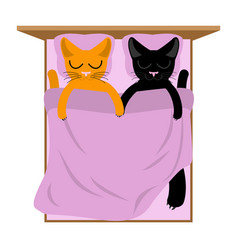 cats lovers in bed pets sleep romantic animal vector image