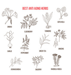 Collection of anti-aging herbs vector