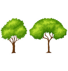 two different shapes of tree vector image