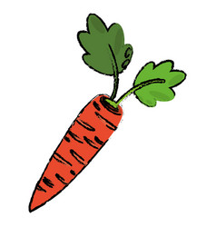 Carrot food diet healthy vector