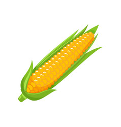 Corn food organic agriculture meal icon vector