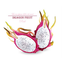 dragon fruit isolated realistic summer vector image