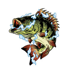 perch fish in water splashes concept vector image