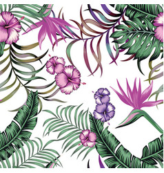 tropical exotic seamless composittion white vector image