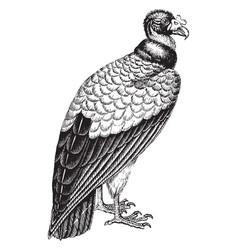 Vulture vintage vector
