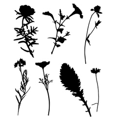 Collection of silhouettes of flowers vector image vector image