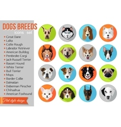 Set of flat popular breeds of dogs icons vector image
