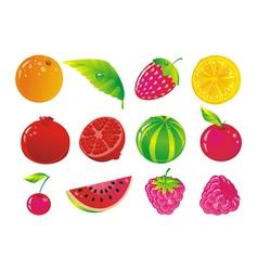 juicy fruit and ripe berries vector image