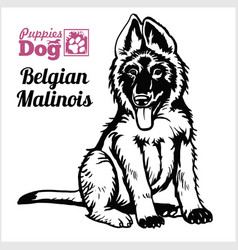 Belgian malinois puppy sitting drawing hand vector