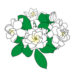 Bouquet of gardenia jasminoides cape jasmine vector