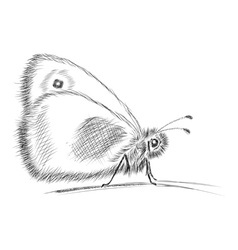 Butterfly sketch vector