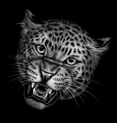 growling leopard vector image