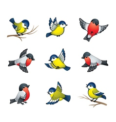 Winter birds vector