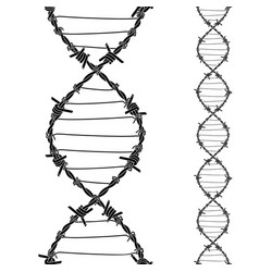 Barbed wires twisted and tied like a dna spiral vector