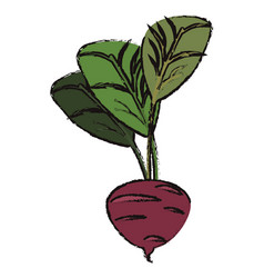 Beet food diet healthy vector