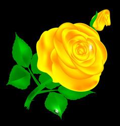 Dark and yellow rose vector