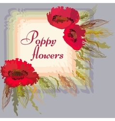 Frame with red poppy flowers and spike lets of vector