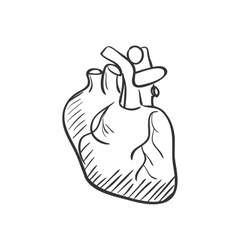 Heart doodle drawing vector