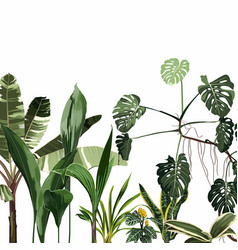 tropical leaves on white background vector image