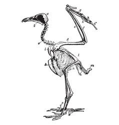 Vulture skeleton vintage vector