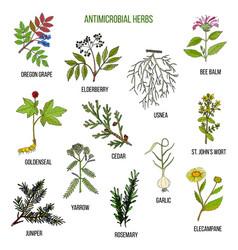 antimicrobial herbs hand drawn set of medicinal vector image vector image