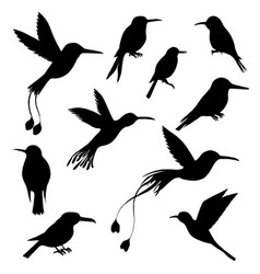 set of hummingbirds silhouettes vector image
