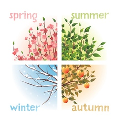 4 seasons in 1 tree vector