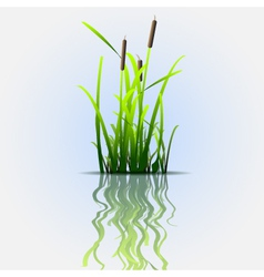 reflection eco background vector image
