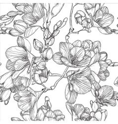 Spring Freesias Sketch vector