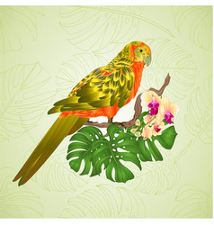 Sun conure parrot tropical exotic bird vector