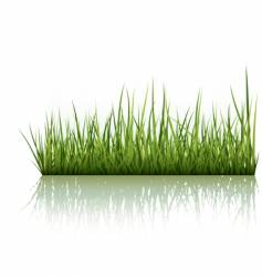 green grass isolated on white vector image vector image