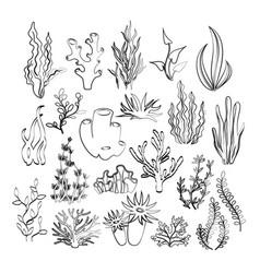 outline seaweeds vector image