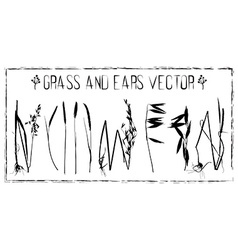 Set of ears and grass vector