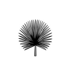 Spiky palm leaves hand drawn sketch icon vector