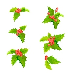 Mistletoe Christmas plants set with leaves and vector image vector image
