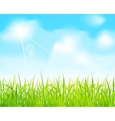 blue sky and green grass vector image vector image