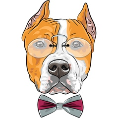 dog American Staffordshire Terrier vector image