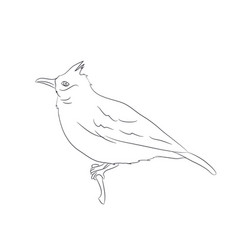bird sitting on a branch lines vector image