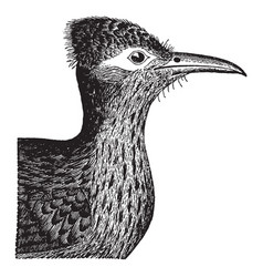 Ground cuckoo head vintage vector