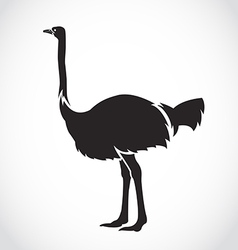 image of an ostrich vector image