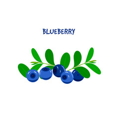 ripe juicy blueberry on a white background vector image