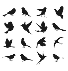 Silhouette of birds2 vector image