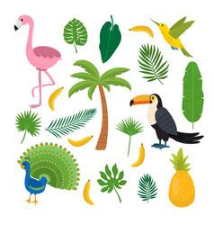toucan hummingbird and flamingo summer tropical vector image vector image
